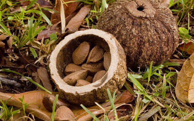 Витамины в бразильском орехе