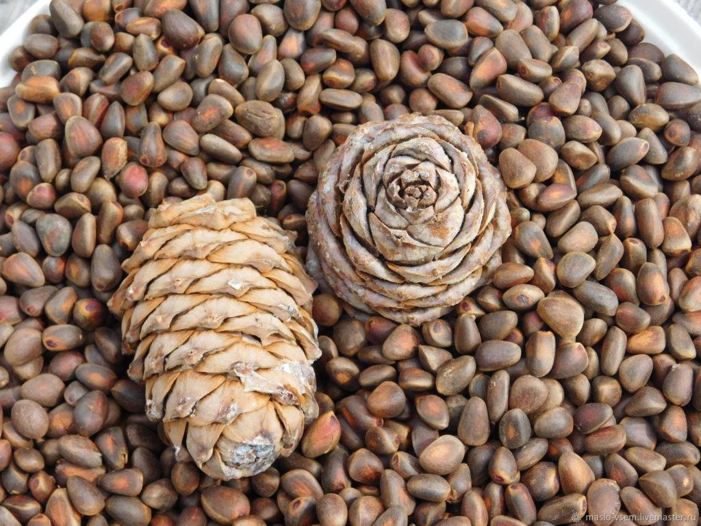 Польза кедровых орехов для мужской потенции