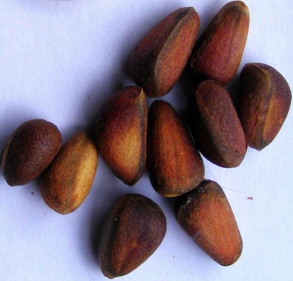 Где растут кедровые орехи - Орех Эксперт