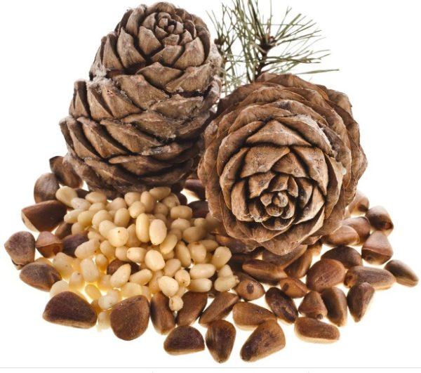 Кедровые орешки это семена