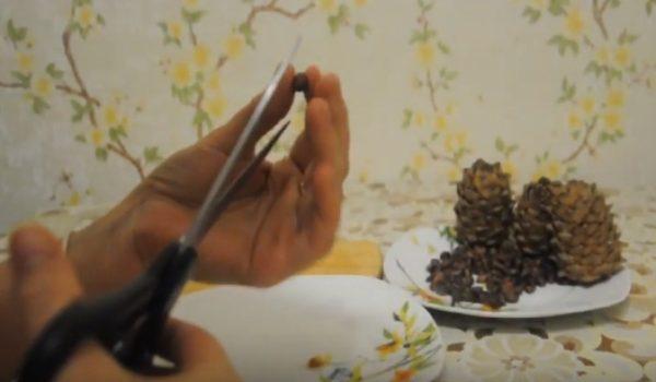 Как чистить кедровые орехи: в домашних условиях и промышленных масштабах, как правильно очистить от скорлупы, что делать при очистке