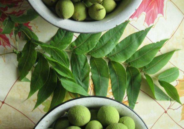 Настойка черного ореха: применение, противовоказания, приготовление